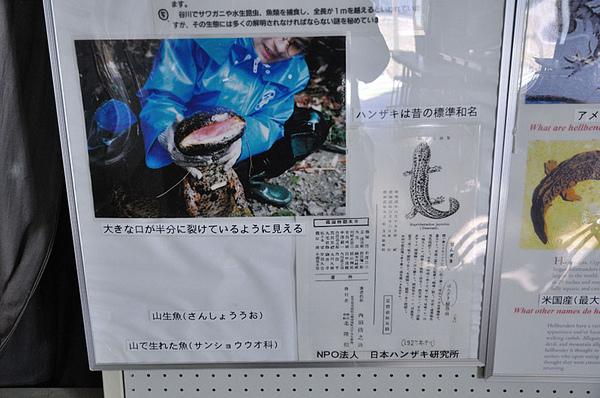 大山椒魚的名稱