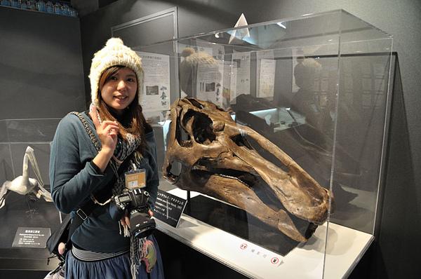 真的恐龍化石