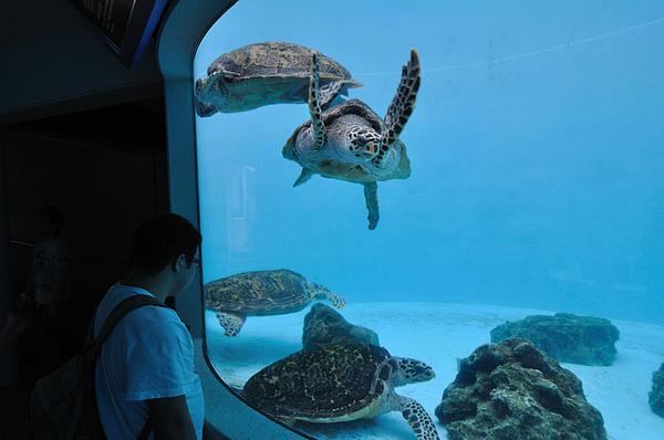 到地下室可以從側面觀察海龜