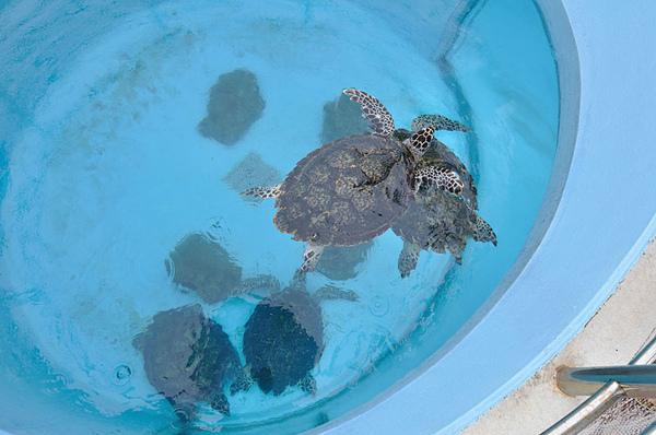 從上方觀察海龜...