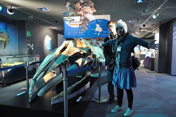 大翅鯨的骨骼標本