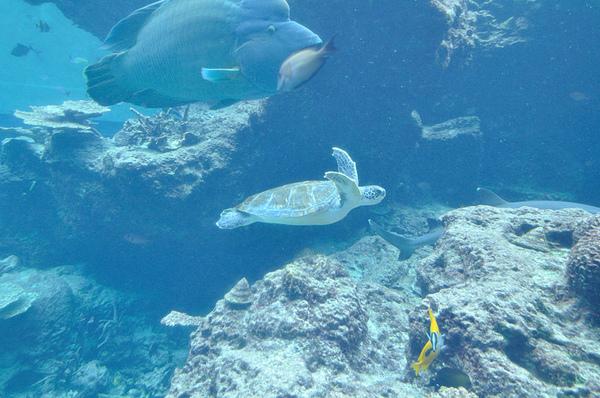 海龜...