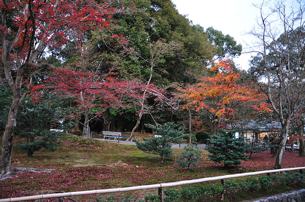 旁邊的楓葉真的好紅