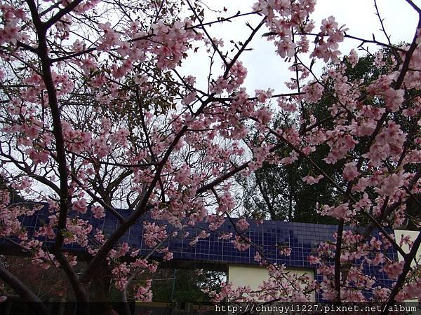 2012.2.19悠閒午後 012.jpg