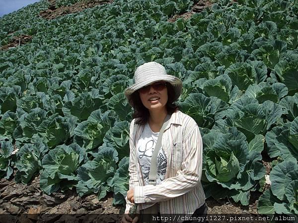 2012.7.13清境農場立鷹峰 097
