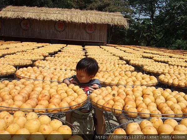 新埔味衛佳柿餅工廠 027