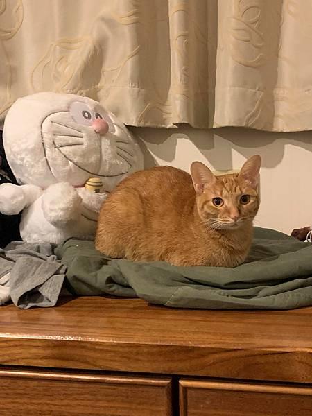 貓13.jpg