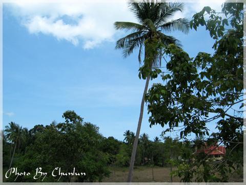 Samui Buri Beach Resort And Spa - 泳池外景色
