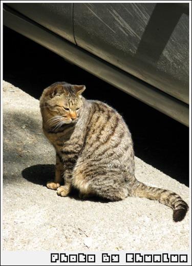 御髮神社 - 貓