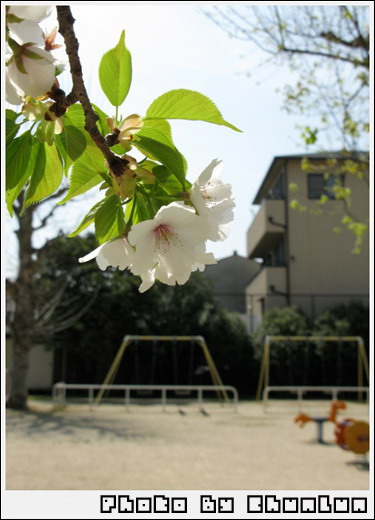往東本願寺路上的小公園