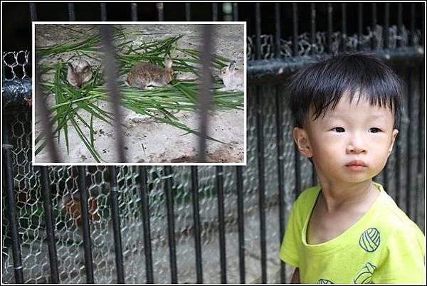 新竹市立動物園 (5)