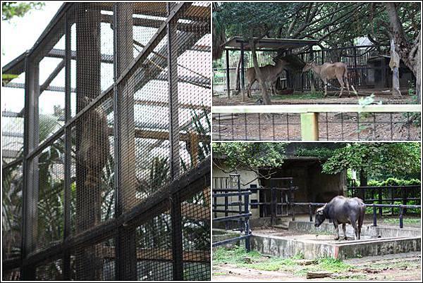 新竹市立動物園 (6)