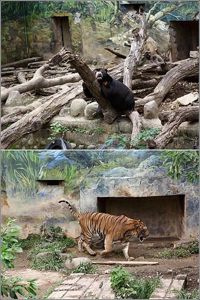 新竹市立動物園 (18)