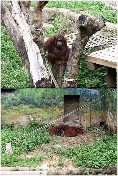 新竹市立動物園 (19)