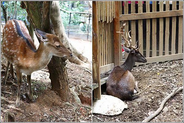 新竹市立動物園 (30)