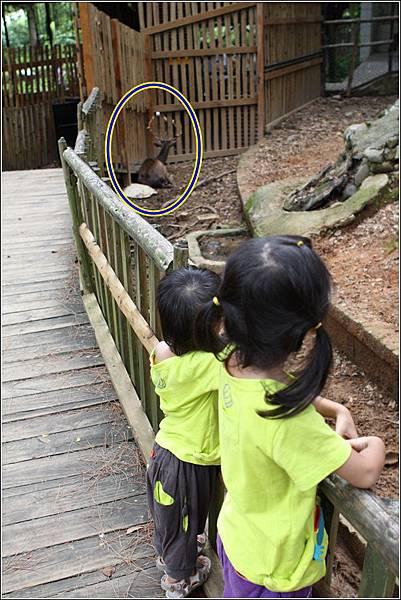 新竹市立動物園 (31)