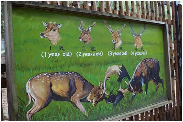 新竹市立動物園 (32)
