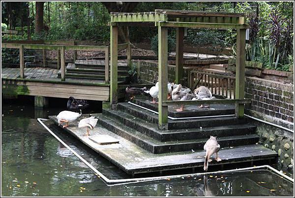 新竹市立動物園 (35)