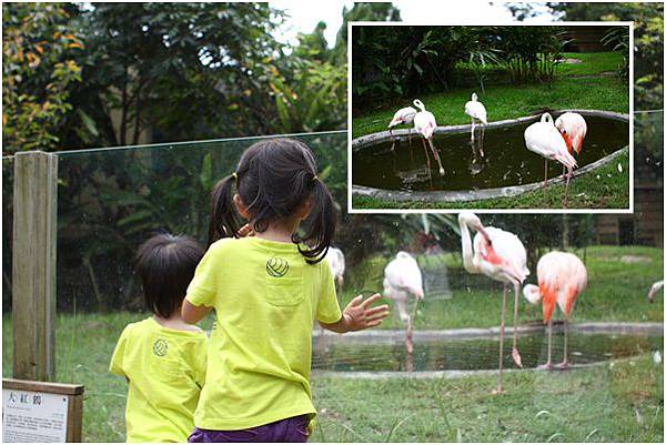 新竹市立動物園 (12)