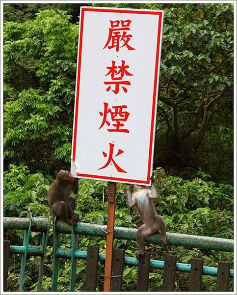 泰源村掃墓 (4)
