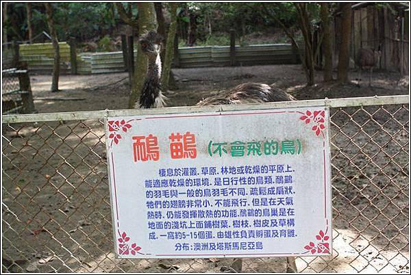 台灣水牛城 (1)