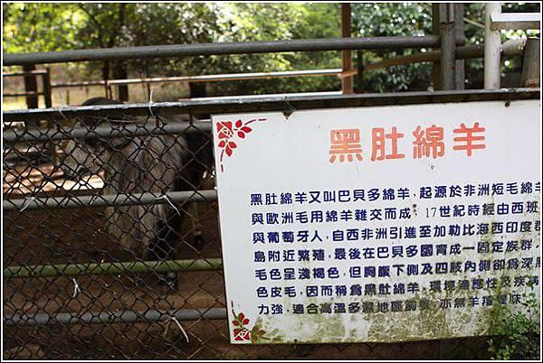 台灣水牛城 (3)
