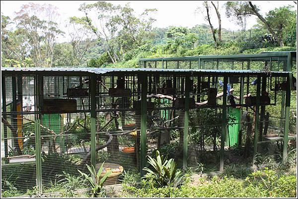 森林鳥花園 (29)