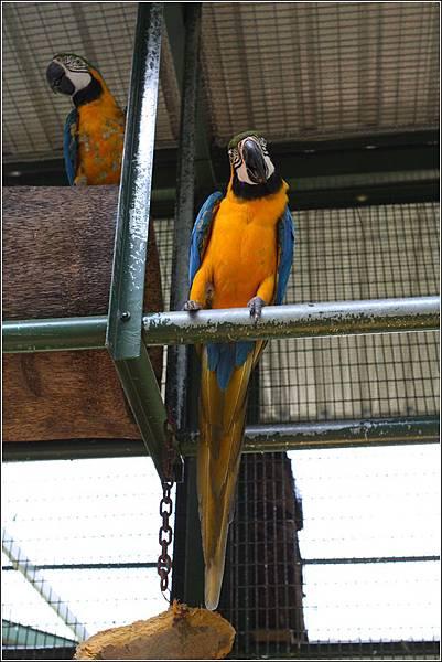 森林鳥花園 (35)