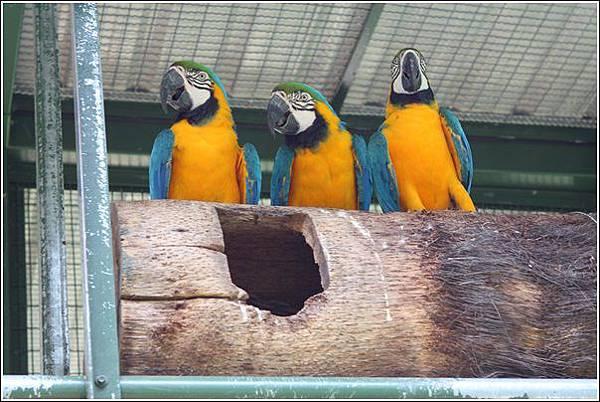 森林鳥花園 (36)