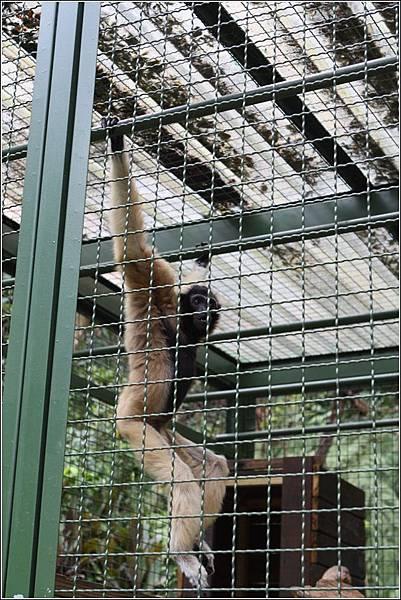森林鳥花園 (46)