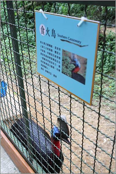 森林鳥花園 (47)