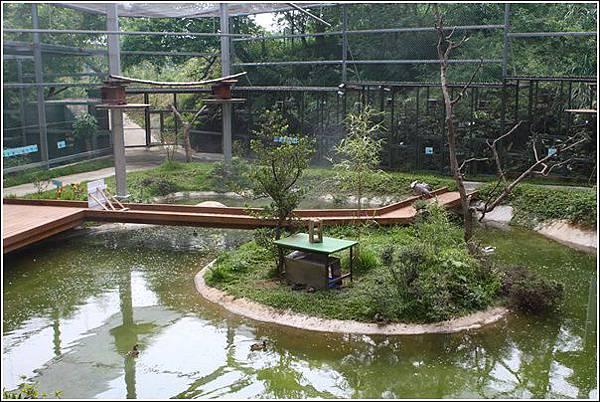 森林鳥花園 (88)