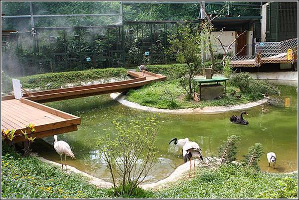 森林鳥花園 (94)