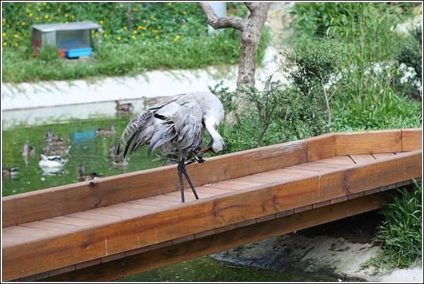 森林鳥花園 (95)