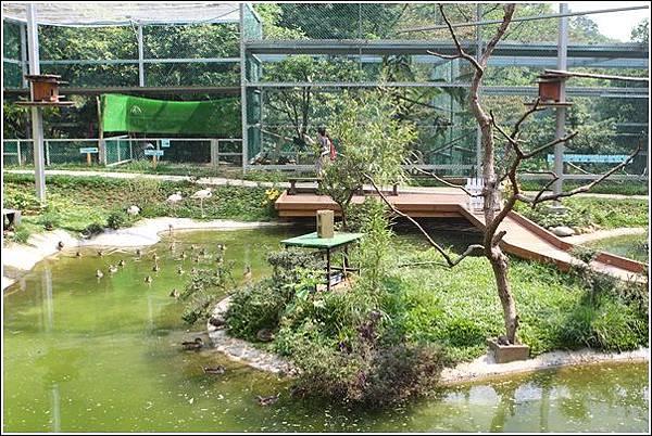 森林鳥花園 (97)