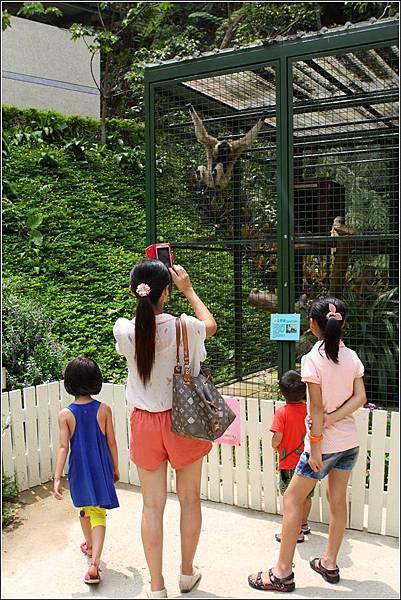 森林鳥花園 (101)
