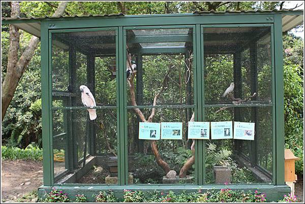 森林鳥花園 (105)