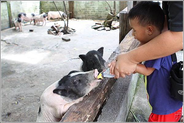 宜農牧場 (37)