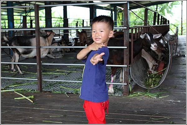 宜農牧場 (43)