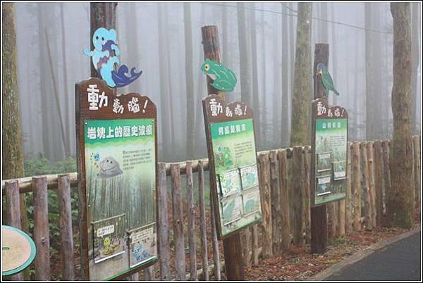 馬武督探索森林 (9)