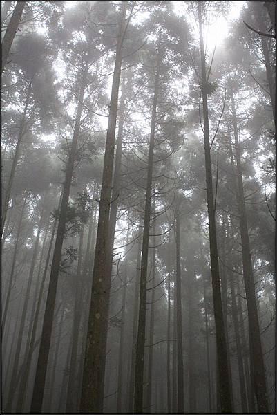 馬武督探索森林 (27)