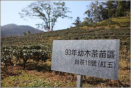 日月老茶廠 (1)