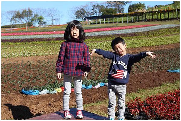 大溪花海農場 (3)