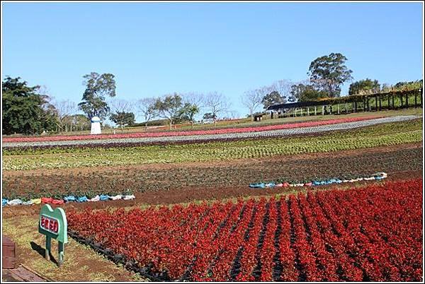 大溪花海農場 (7)