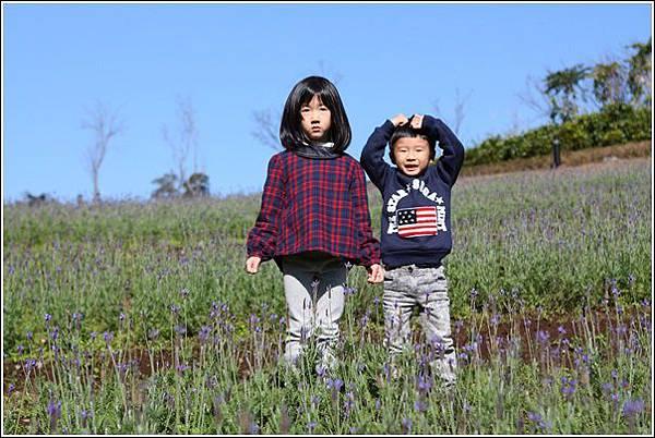 大溪花海農場 (13)