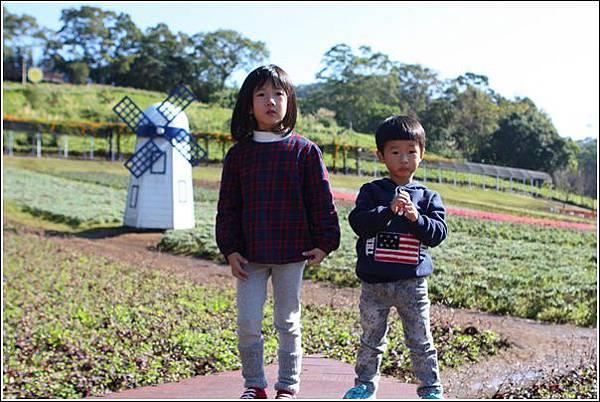 大溪花海農場 (16)