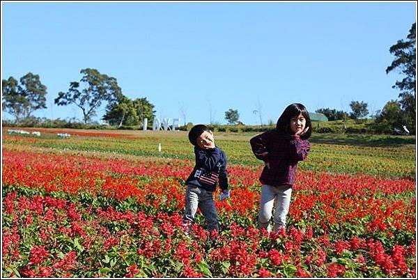 大溪花海農場 (17)