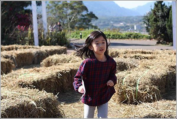 大溪花海農場 (31)