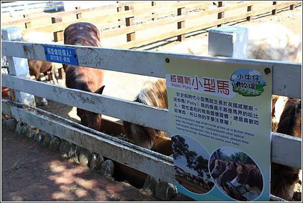 大溪花海農場 (42)