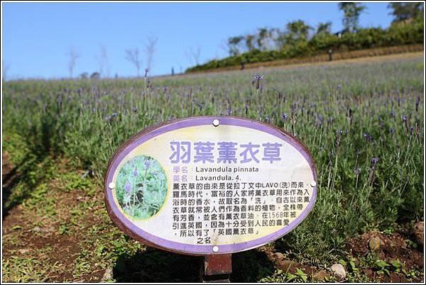 大溪花海農場 (61)